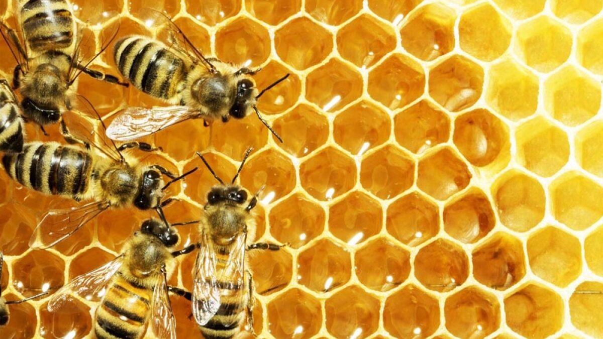 Evento no Centenário explicará importância das abelhas para o Meio Ambiente | Notícias de Mogi