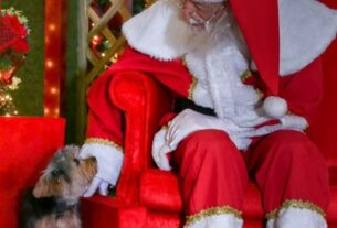 Trono para pets - Papai Noel do Mogi Shopping