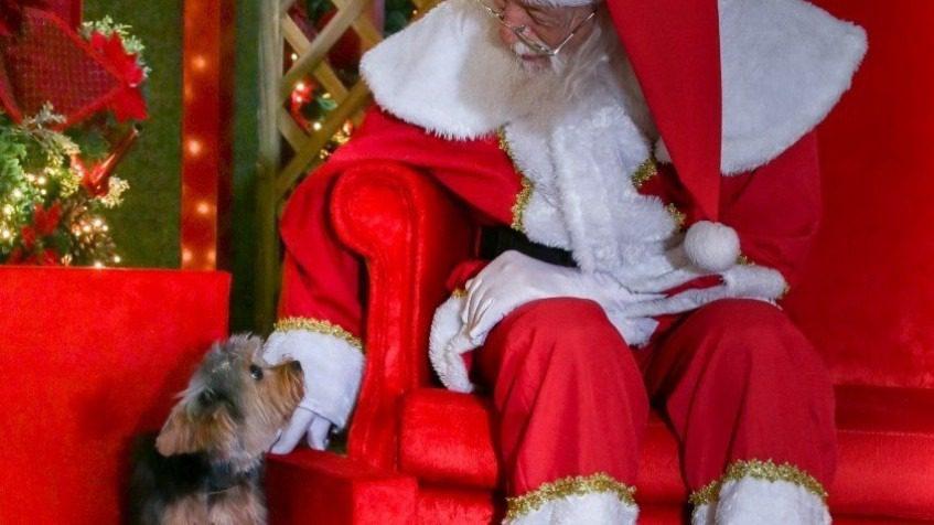 Trono para pets - Papai Noel do Mogi Shopping