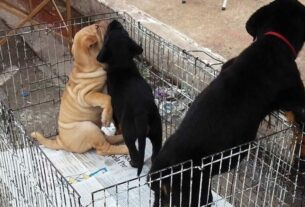 Comércio ambulante de animais