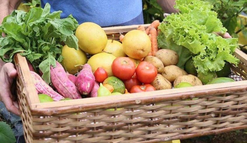 Kit com produtos da Agricultura